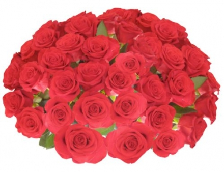 Flower Delivery – Impress Them with 50 RED PREMIUM ROSES (Or Choose Color) ON SALE TODAY ONLY! Fragr
