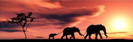 Startonight Canvas Wall Art Elephants Family, Animals USA Design for Home Decor, Dual View Surprise